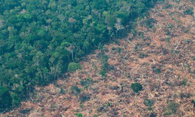 ambiente amazona