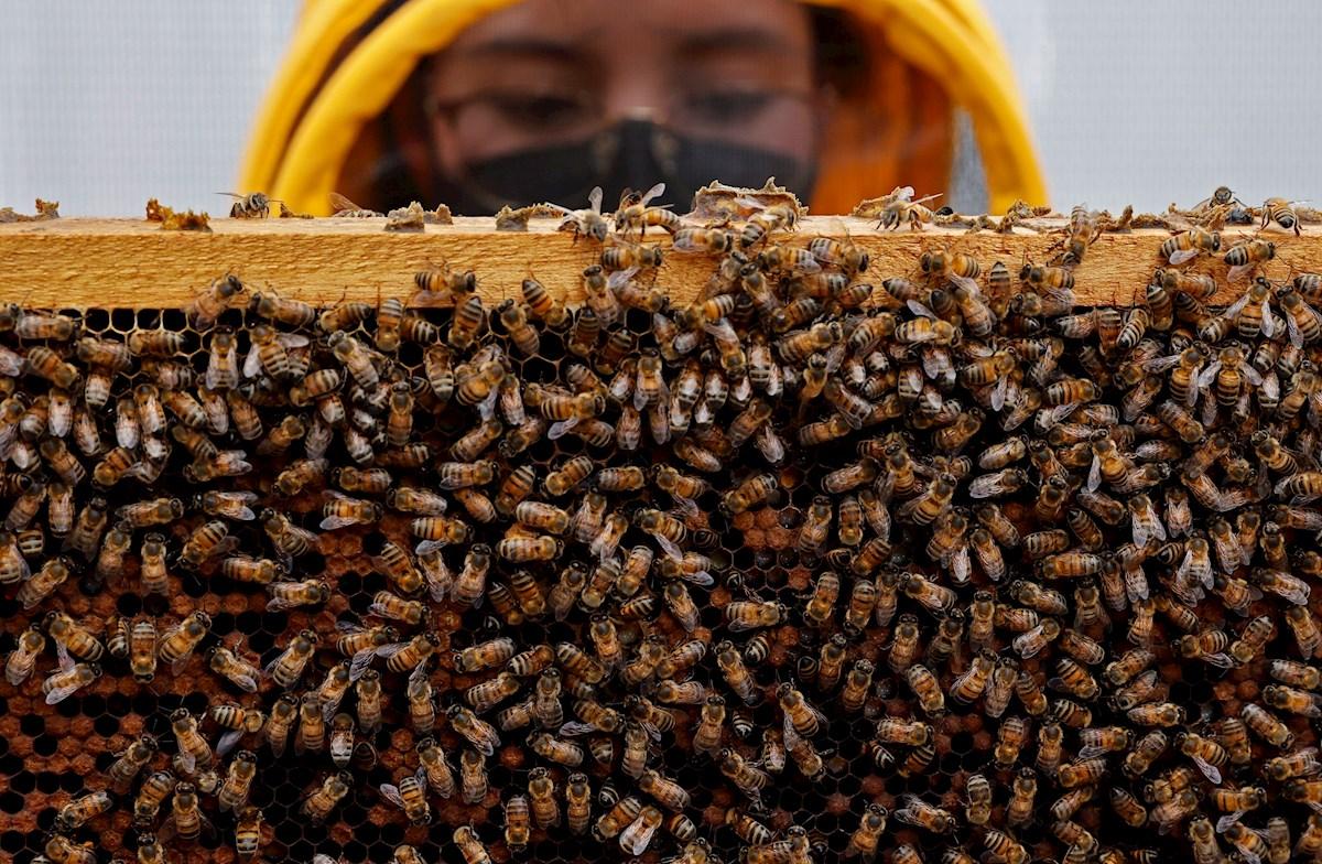 ambiente abejas